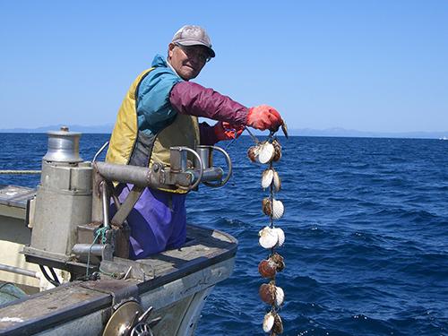 帆立漁 フレッセイ